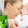 Ăn lá lốt không tốt cho mẹ bầu, khiến mẹ mất sữa sau sinh, đúng hay sai?