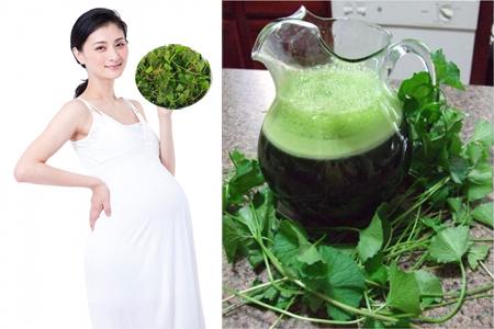 phụ nữ mang thai ăn ráu má trong thai kỳ lợi hay hại