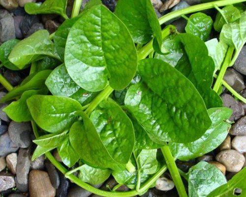 Các loại rau bổ sung sắt cho bà bầu thường thấy trong mùa hè