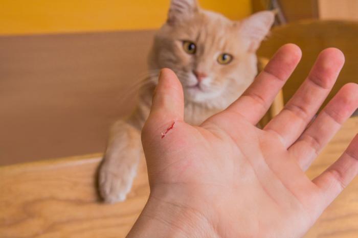 Bà bầu ăn thịt mèo được không? Lưu ý cho mẹ bầu khi ăn các loại thịt